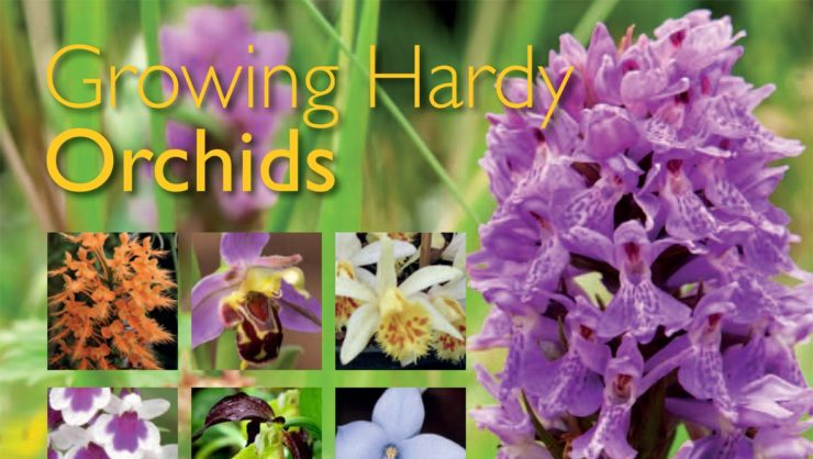 Growing hardy orchids - book cover