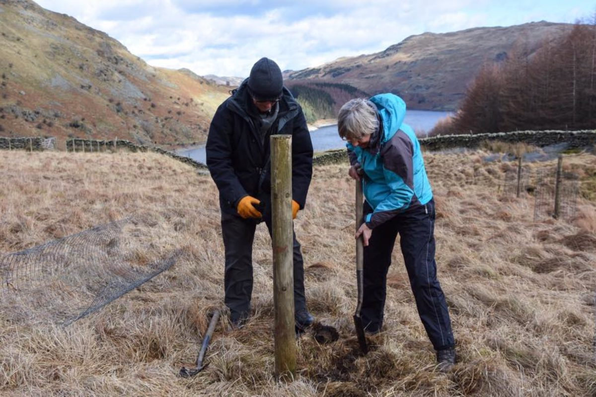Alpine Garden Society RSPB Haweswater conservation project