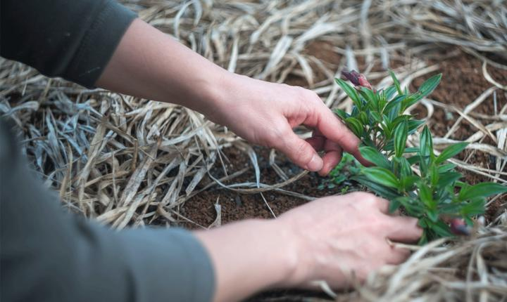 Plant Knowledge Alpine Garden Society