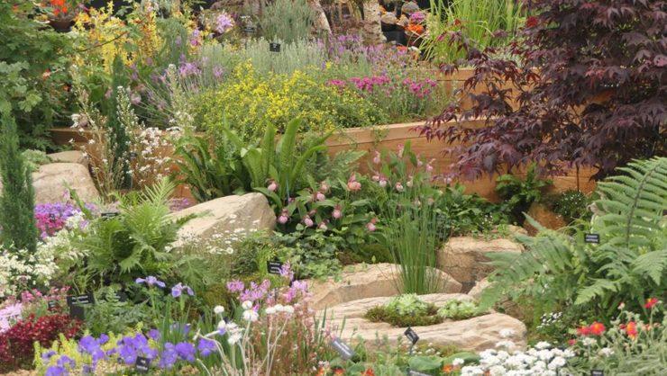 Alpine Garden Society RHS Cheslea Flower Show 2018