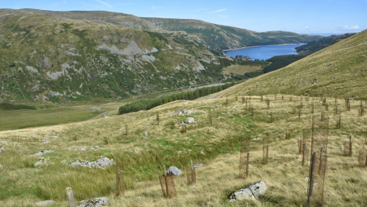 RSPB Haweswater Mardale Head conservation - David Morris