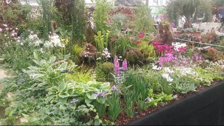 AGS at RHS Chelsea Flower Show 2016
