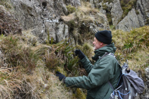 Plant and nature conservation lake district