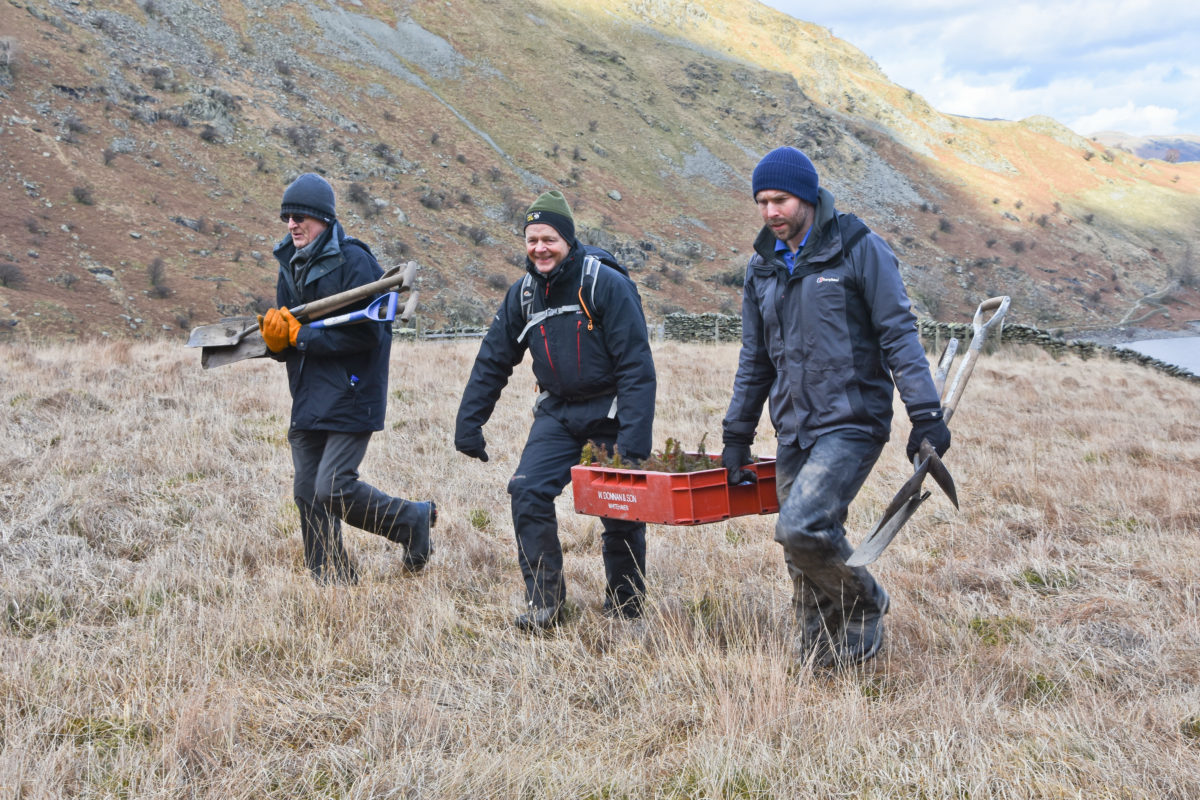 RSPB Haweswater mardale alpine planting