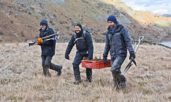 RSPB Haweswater mardale alpine planting