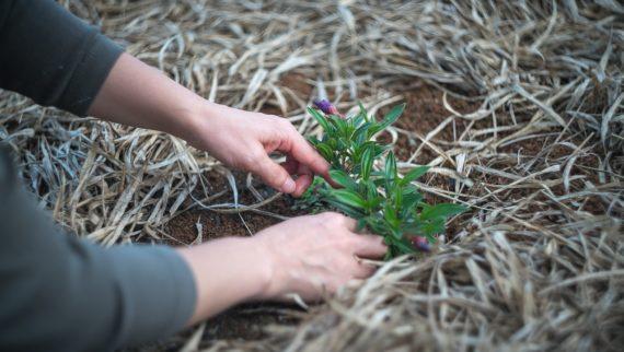 Leave a legacy alpine garden society