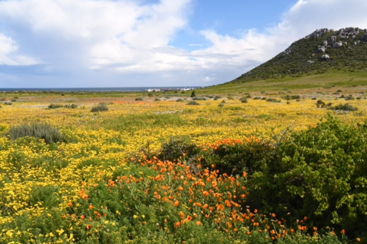 Western Cape (South Africa)