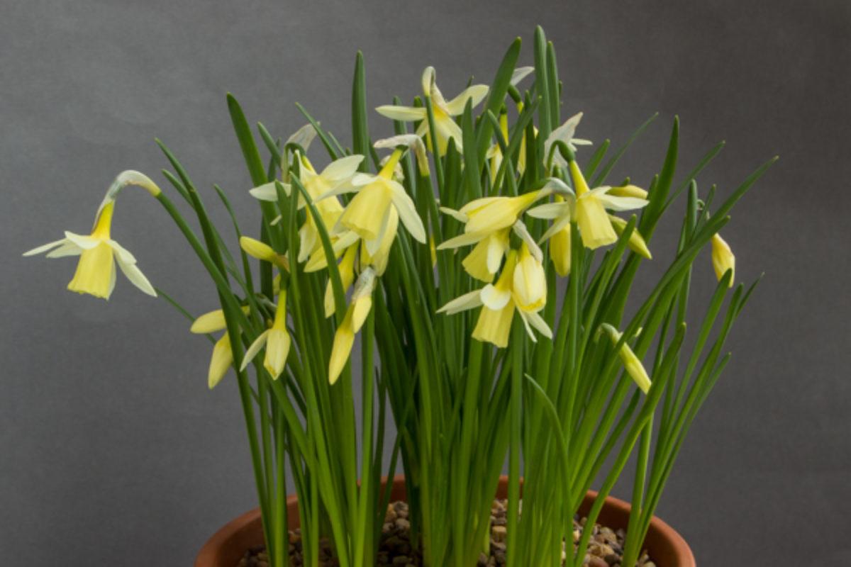 Narcissus Sennocke_exh_Michael Chadwick