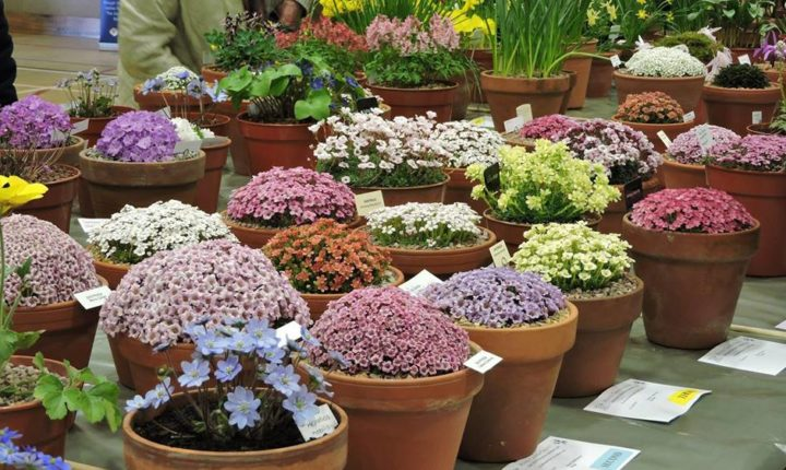 Alpine garden society plant shows