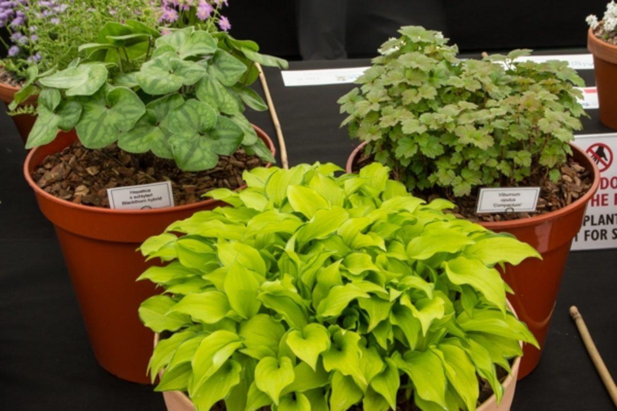large 3 pans rock plants for foliage effect_exh_Diane Clement