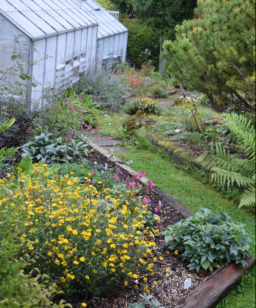 On the other side of the house, here are parts of the front rock gardens and screes, with the alpine houses.