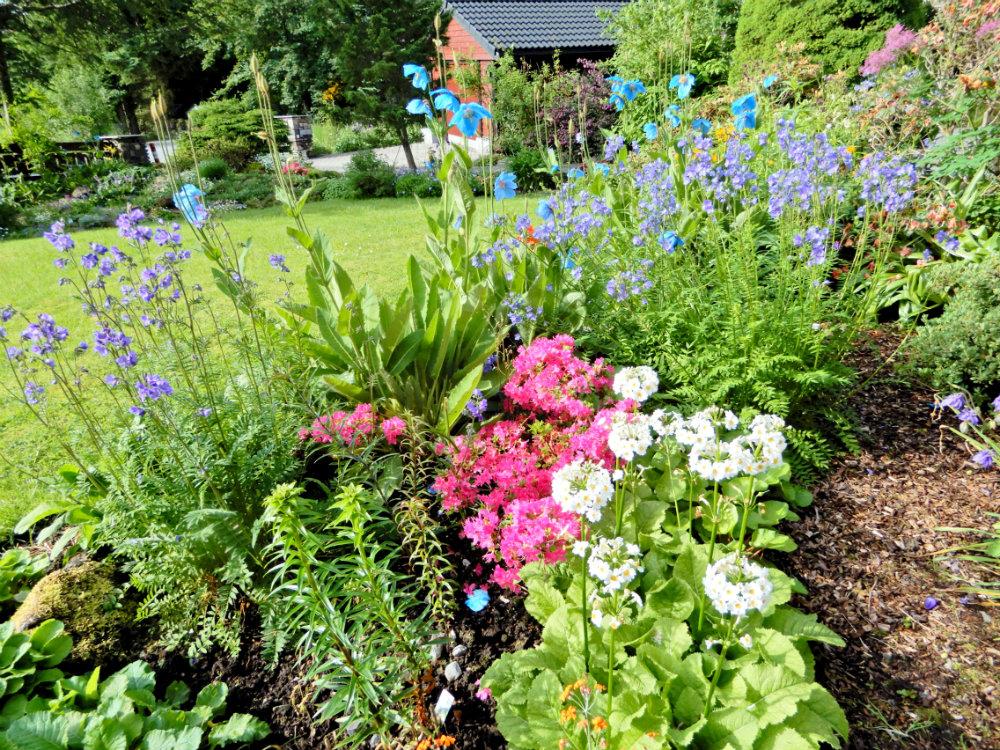 Winner Class 5, 2017: Tall herb bed, own garden, Norway (Hilary Birks)