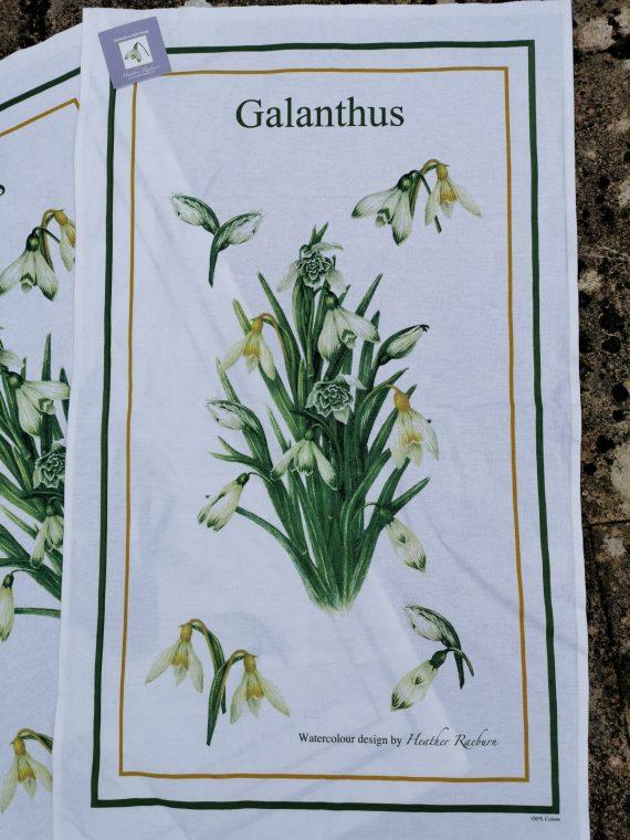 Heather Raeburn Galanthus Tea Towel