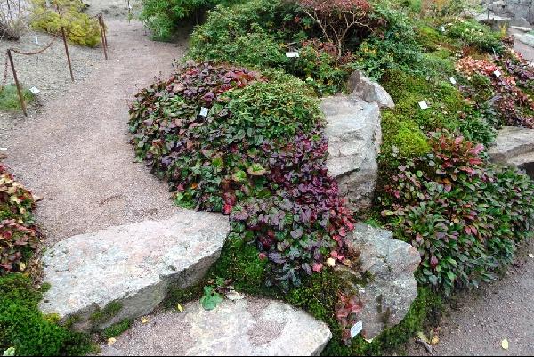 The rock garden at Gothenburg Botanical Gardens