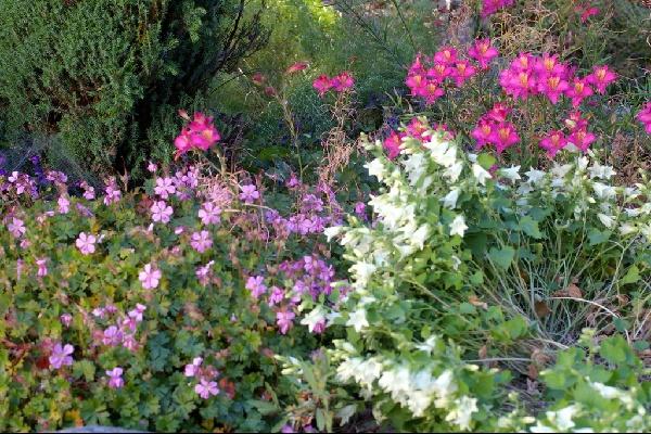 north wales garden july 2018