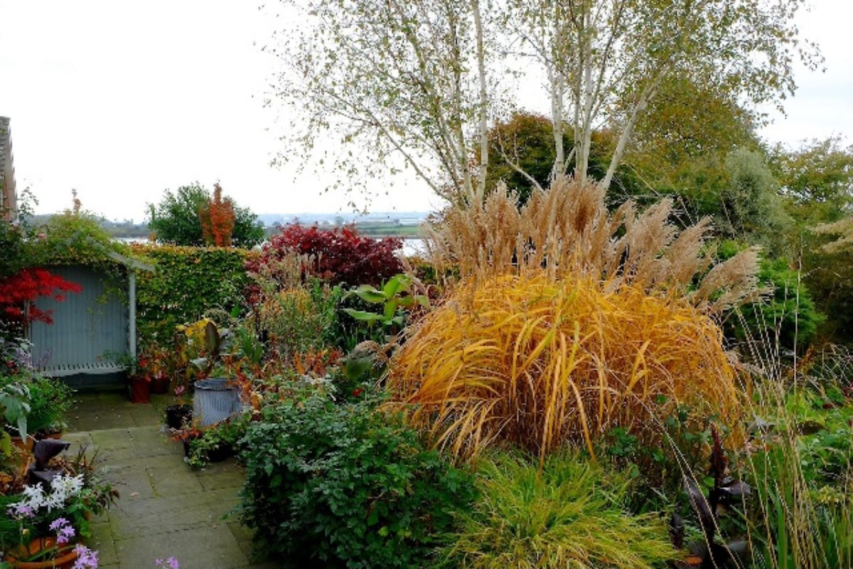 (A view of Hester and Paddy Forde's garden near to Cork in south-west Ireland)