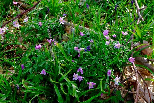 The Blean woodland kent