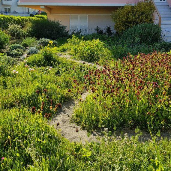The dry Mediterranean garden