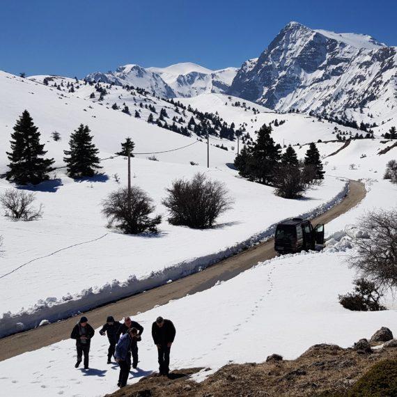 Snowy alpine scene showing mountain habitat