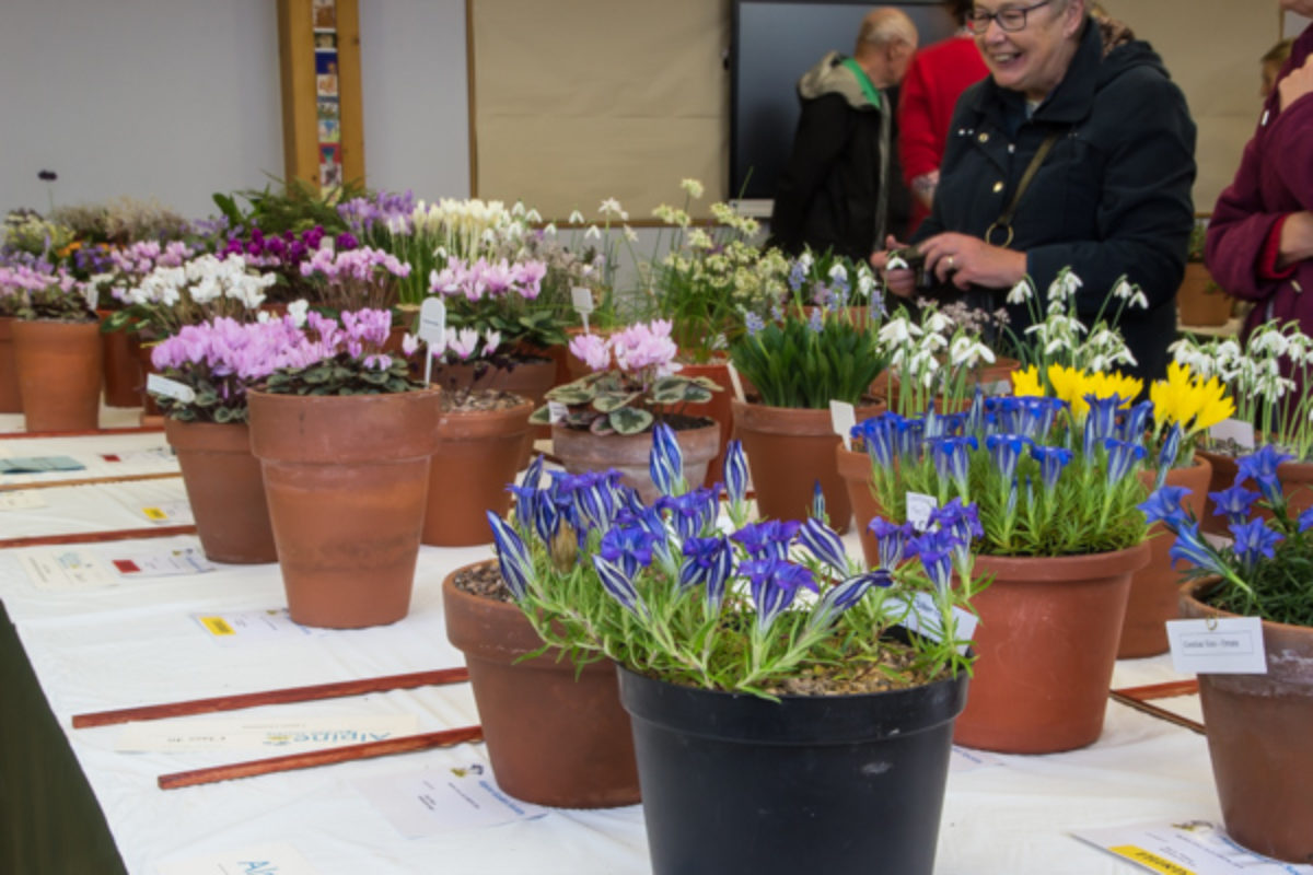 Harlow Carr show view 2018