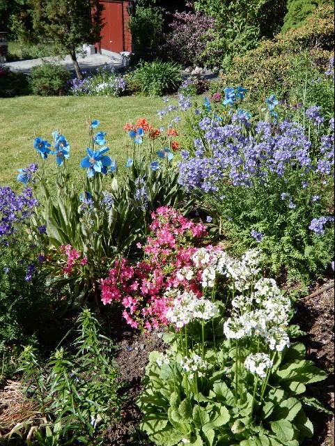 Colourful tall-herb alpines - Hilary Birks (Class 3)