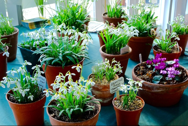 Plant Fairs Roadshow