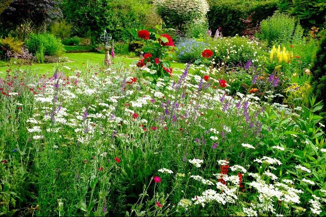 Julia Jarman's garden