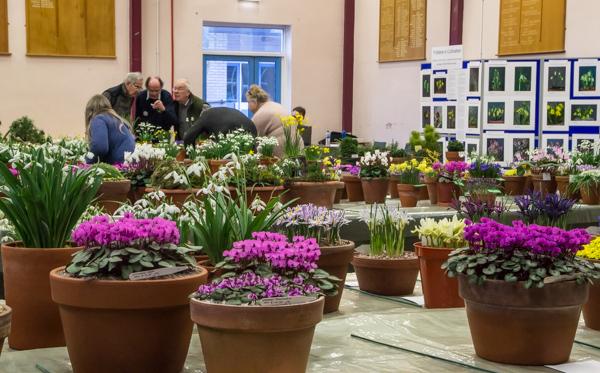 Alpine Garden Society South Wales Show 2019 flower show