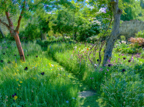 Class Eight: John Willis - Shepherd House Meadow Garden. Inveresk, Scotland (June 2013)