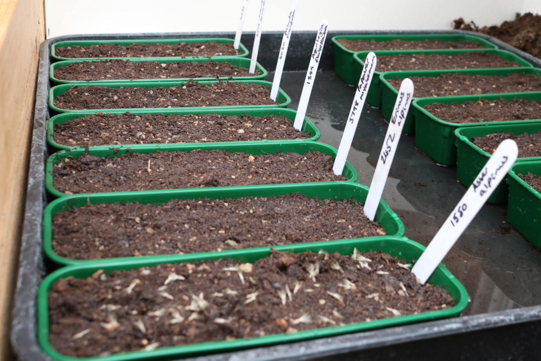 Planting Grass Seed With Compost
