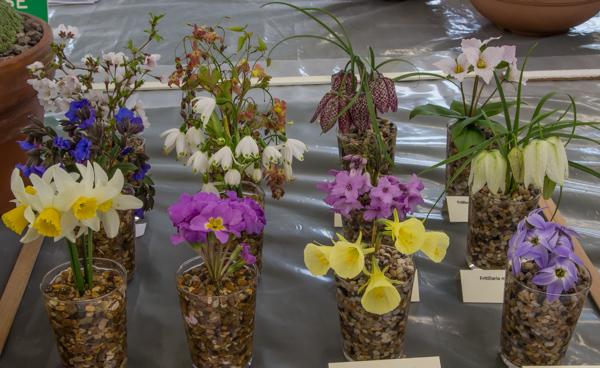 Cut flower class