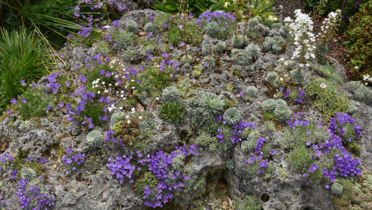 Class Five: Harry Jans - Large tufa rock with various alpines. Own garden in the Netherlands (May 2018)