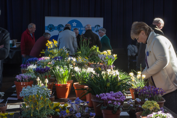 Show view - Pershore 2019