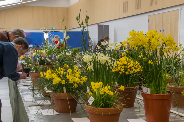 Show view South West Show RHS Rosemoor 2019
