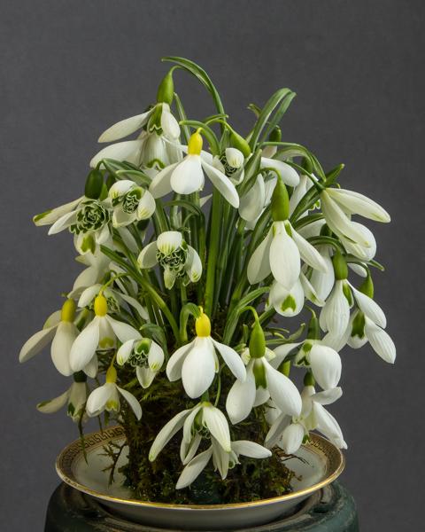 Floral Arrangement (Exhibitor: Ben & Paddy Parmee)