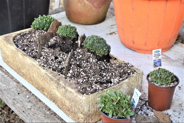 Planting up a trough