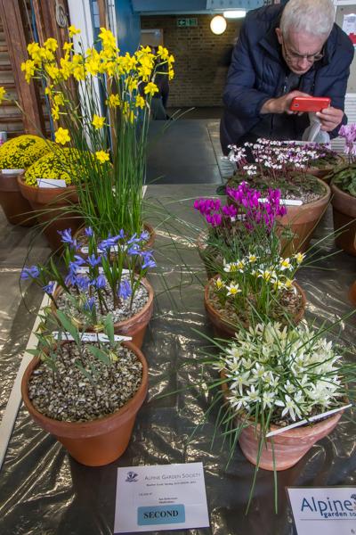 Small six pan rock plants (Exhibitor: Ian Robertson)