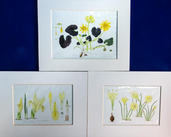 Three paintings (Exhibitor: Caroline Jackson-Houlston)