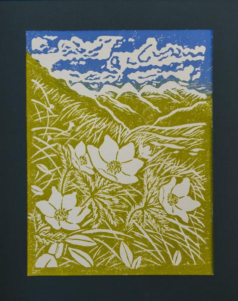 Pulsatilla alpina (Exhibitor: Gemma Hayes) botanical art