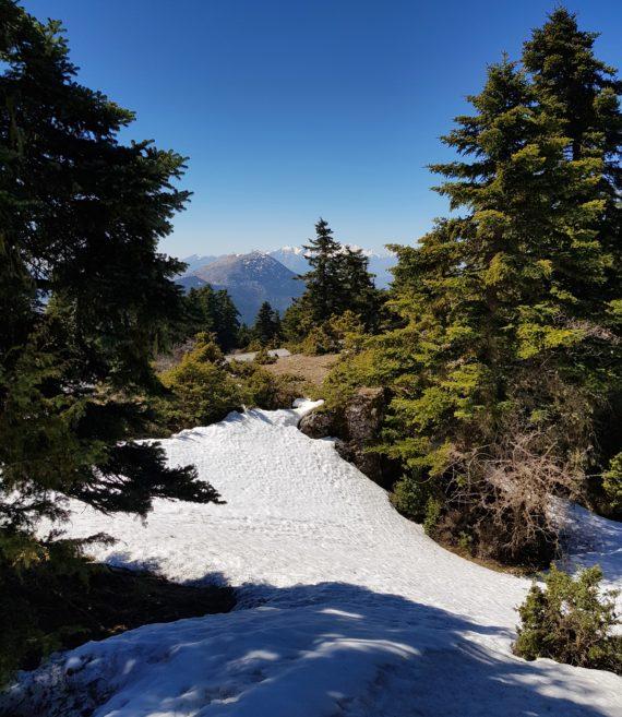 Alpine habitat