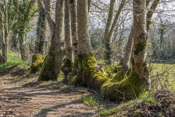 Boundary hedge at Wildside Garden Nursery, Devon
