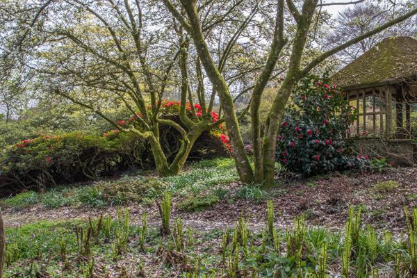 Bulb Meadow, The Garden House, Devon