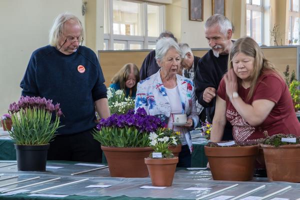 Judging alpine garden society kent spring show 2019