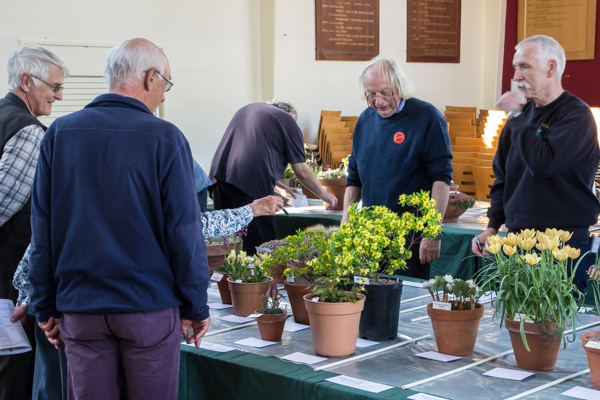 Juding alpine garden society kent spring show 2019