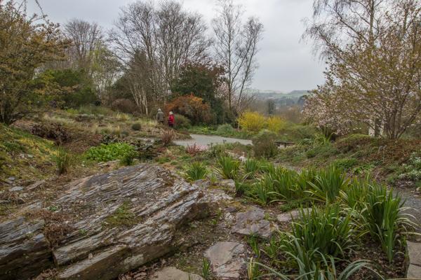 Quarry Garden, The Garden House, Devon