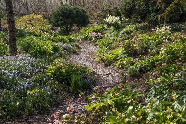 The rock garden at Wildside Nursery, Devon.