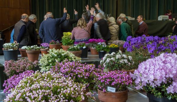 Show view, Alpine Garden Society Midland Show 2019