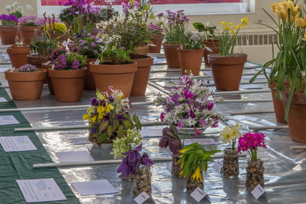 Show view alpine garden society kent spring show 2019