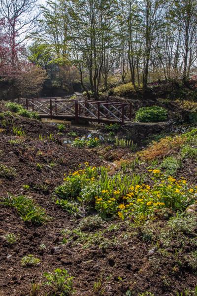 The stream at Wildside Nursery Garden in Devon.