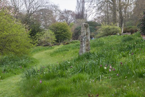 Wildflower meadow, The Garden House, Devon